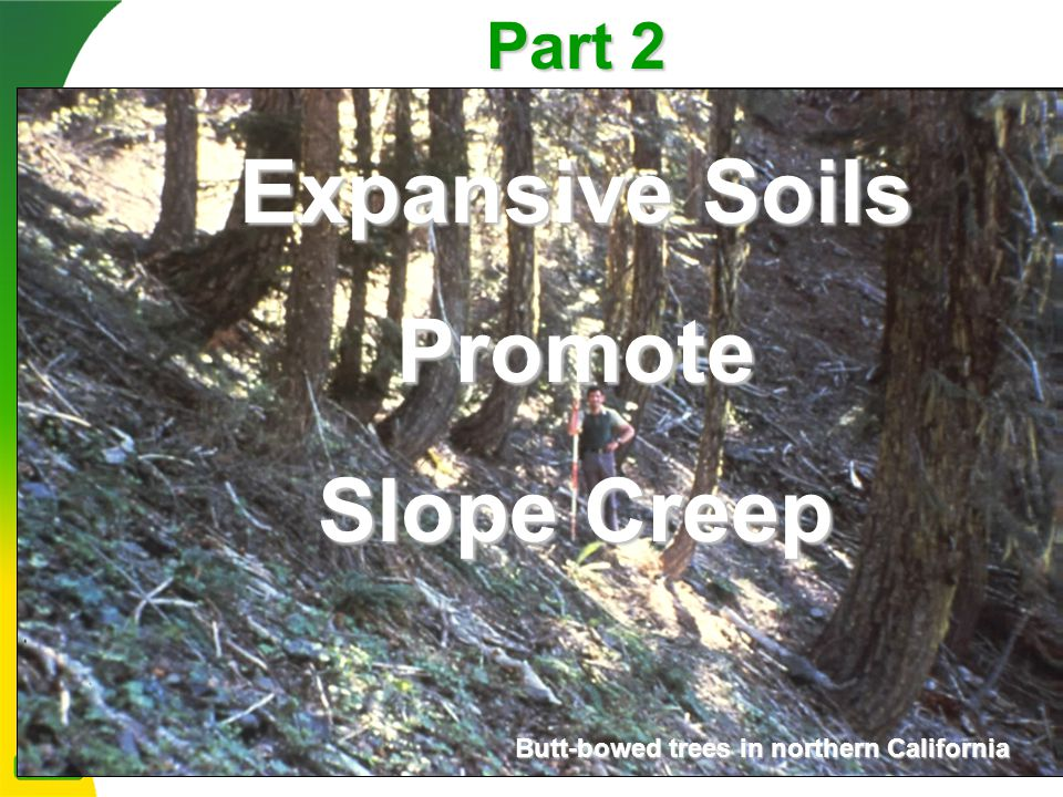Part 2 Expansive Soils Promote Slope Creep Butt-bowed trees in northern California