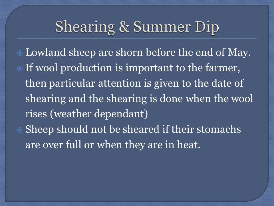  Lowland sheep are shorn before the end of May.