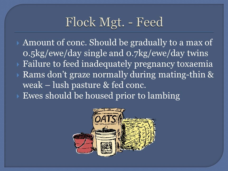 Amount of conc. Should be gradually to a max of 0.5kg/ewe/day single and 0.7kg/ewe/day twins  Failure to feed inadequately pregnancy toxaemia  Ram
