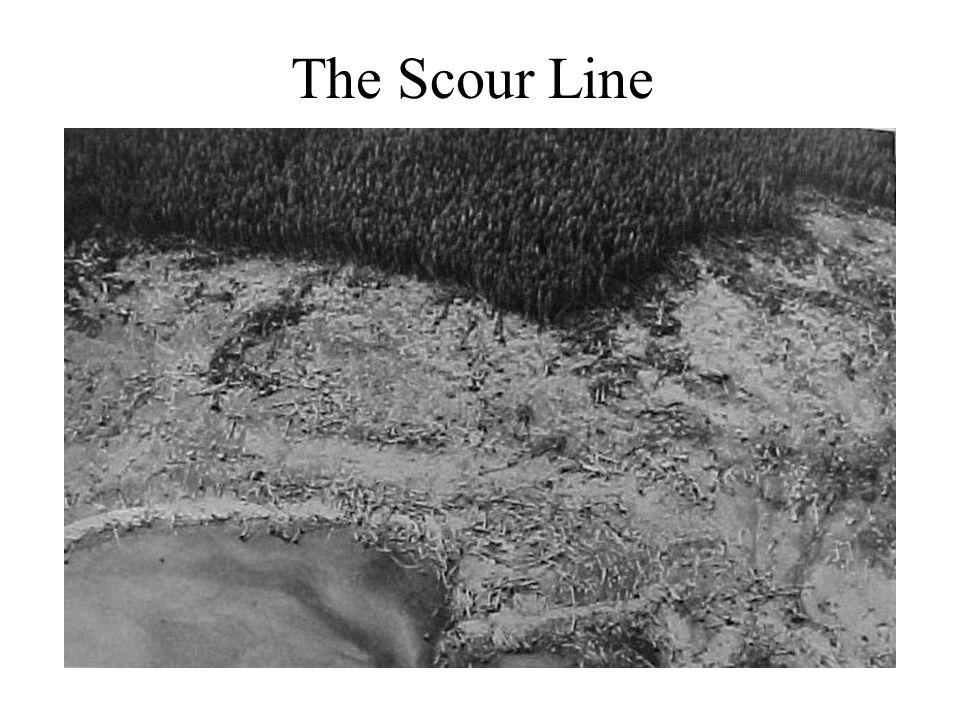 The Scour Line