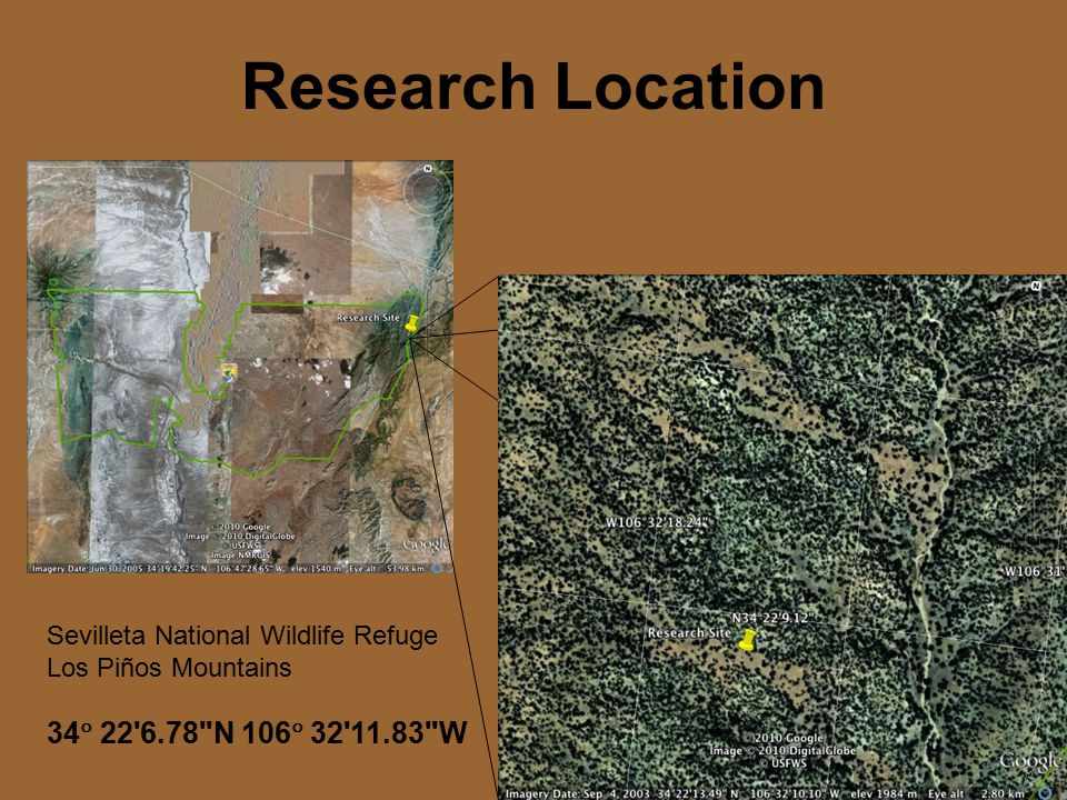 Research Location Sevilleta National Wildlife Refuge Los Piños Mountains 34  22 6.78 N 106  32 11.83 W