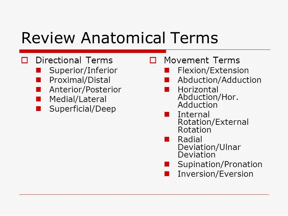Review Anatomical Terms  Directional Terms Superior/Inferior Proximal/Distal Anterior/Posterior Medial/Lateral Superficial/Deep  Movement Terms Flex