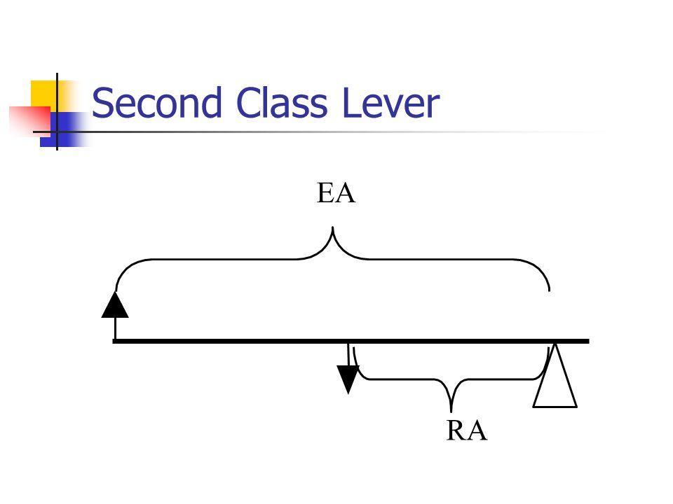 Second Class Lever EA RA