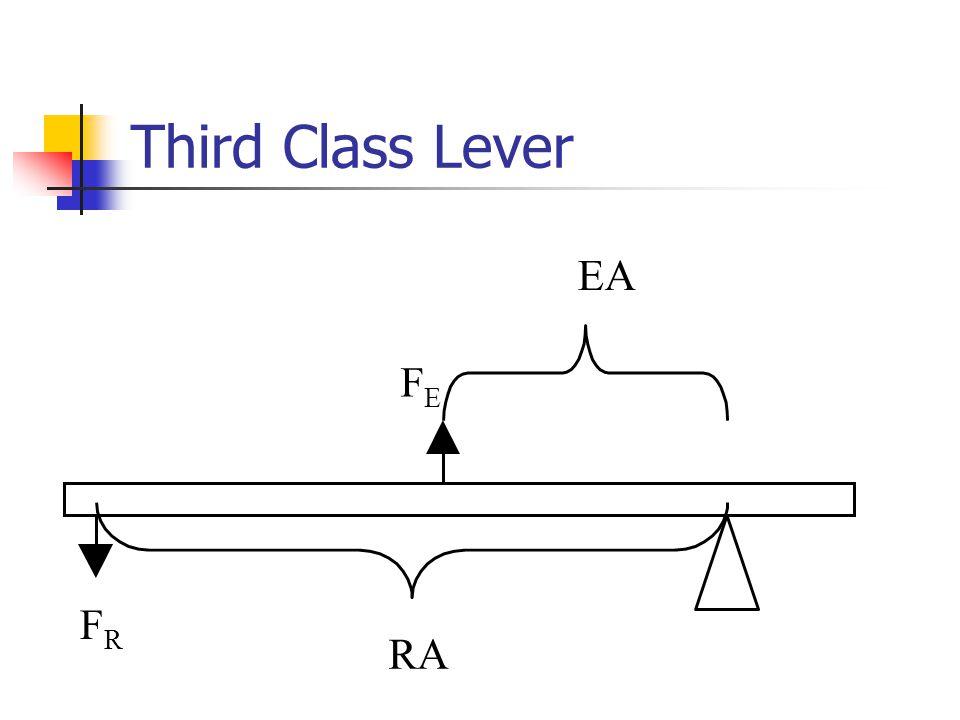 Third Class Lever EA RA FRFR FEFE