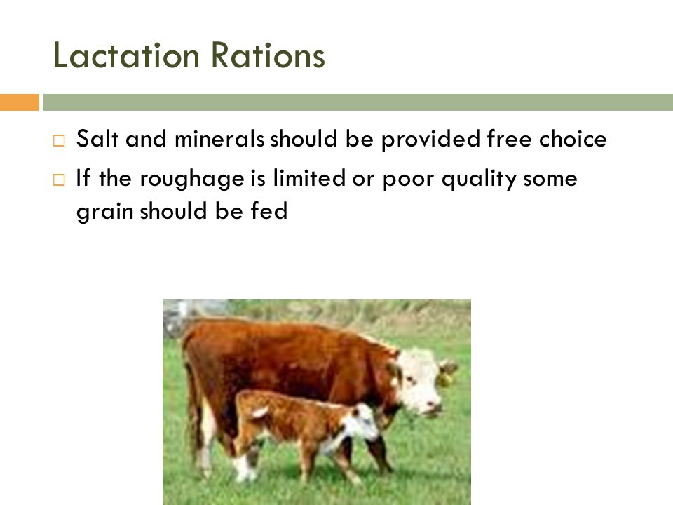 Lactation Rations  Salt and minerals should be provided free choice  If the roughage is limited or poor quality some grain should be fed