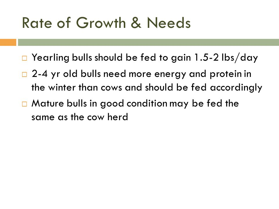 Rate of Growth & Needs  Yearling bulls should be fed to gain 1.5-2 lbs/day  2-4 yr old bulls need more energy and protein in the winter than cows an