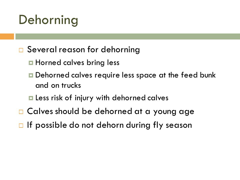 Dehorning  Several reason for dehorning  Horned calves bring less  Dehorned calves require less space at the feed bunk and on trucks  Less risk of
