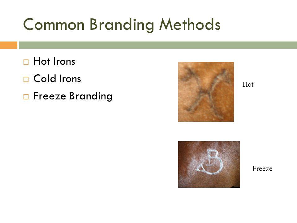 Common Branding Methods  Hot Irons  Cold Irons  Freeze Branding Hot Freeze