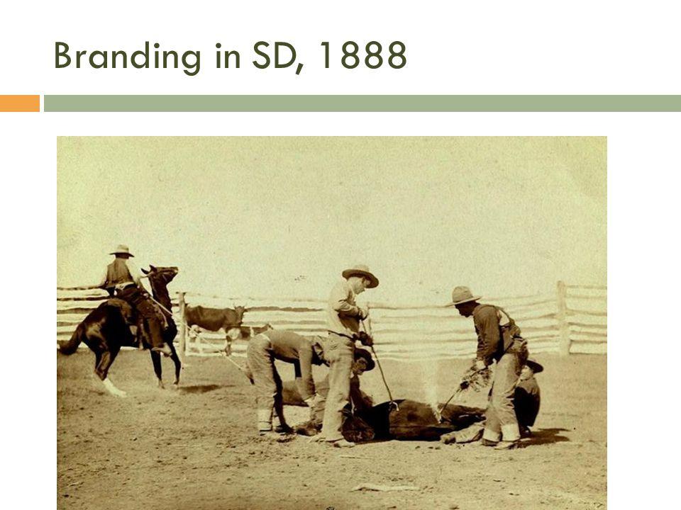 Branding in SD, 1888