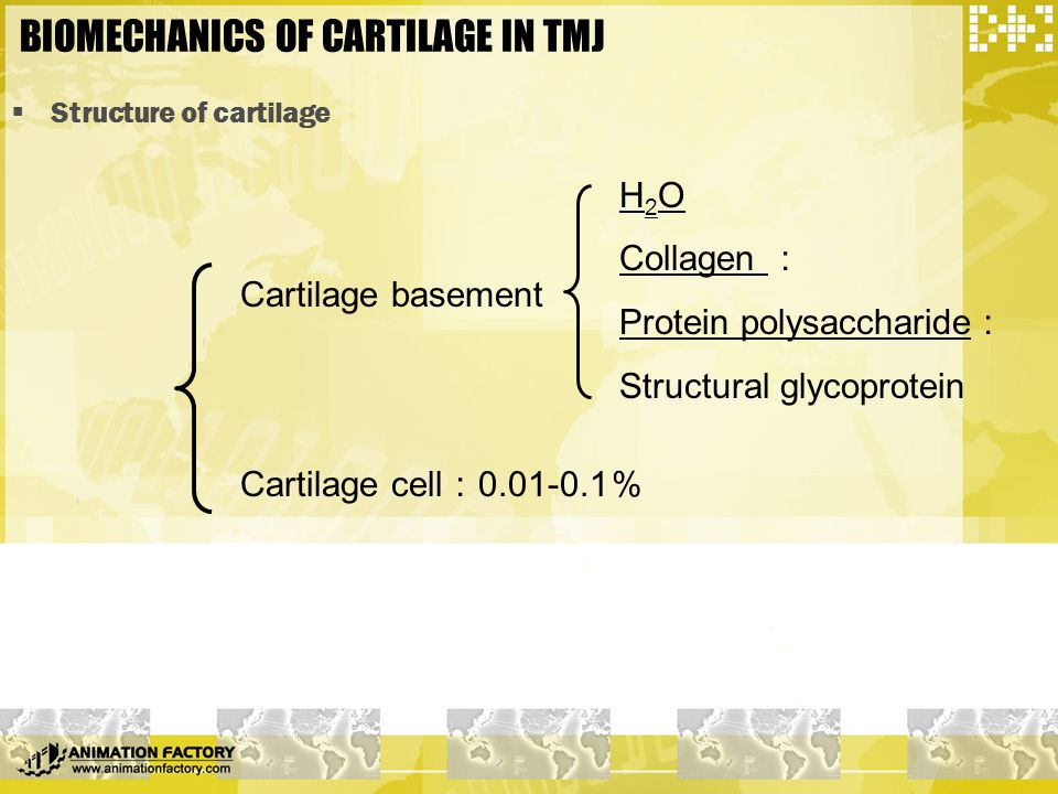  Structure of cartilage Cartilage basement Cartilage cell : 0.01-0.1 % H 2 O Collagen : Protein polysaccharide : Structural glycoprotein