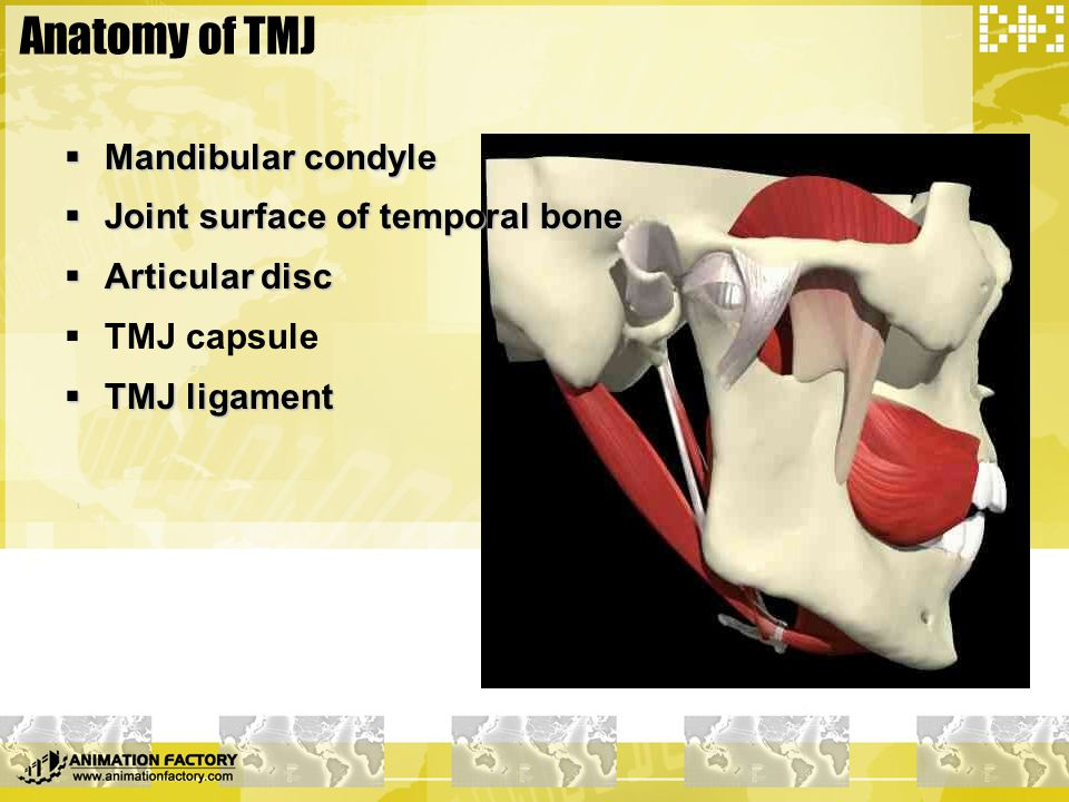Muscle tissue related to TMJ  Lateral pterygoid muscle  Upper side & lower side  Function HEAVY LOAD BUT HYPOPLASIA