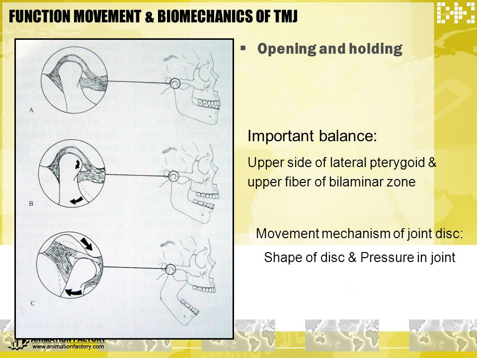FUNCTION MOVEMENT & BIOMECHANICS OF TMJ  Opening and holding Important balance: Upper side of lateral pterygoid & upper fiber of bilaminar zone Movem