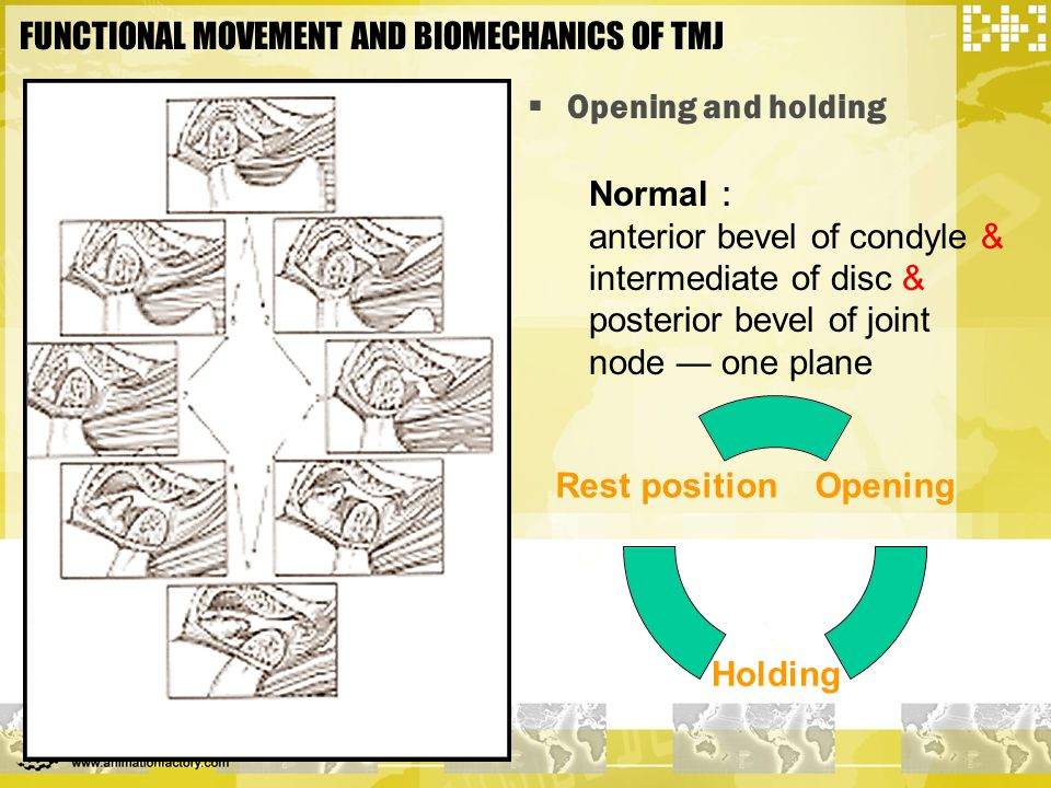 FUNCTIONAL MOVEMENT AND BIOMECHANICS OF TMJ  Opening and holding Normal : anterior bevel of condyle & intermediate of disc & posterior bevel of joint