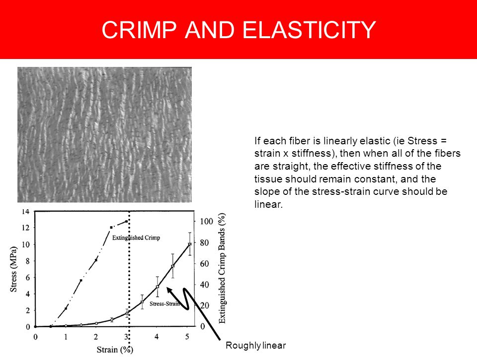 CRIMP AND ELASTICITY If each fiber is linearly elastic (ie Stress = strain x stiffness), then when all of the fibers are straight, the effective stiffness of the tissue should remain constant, and the slope of the stress-strain curve should be linear.