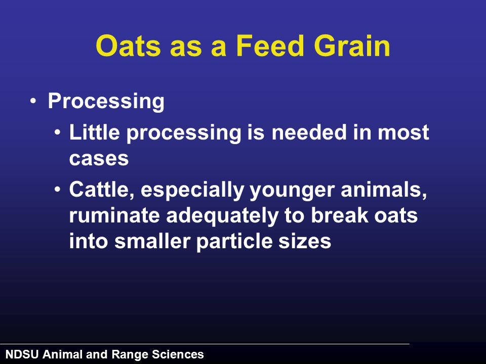 NDSU Animal and Range Sciences Oats as a Feed Grain Processing Little processing is needed in most cases Cattle, especially younger animals, ruminate