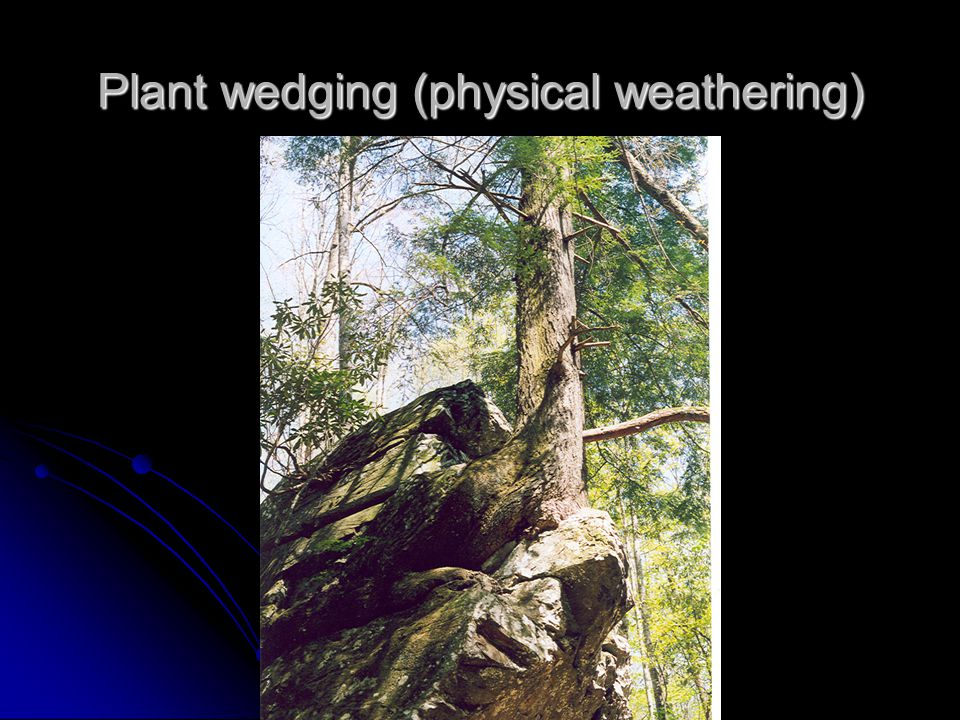 Plant wedging (physical weathering)