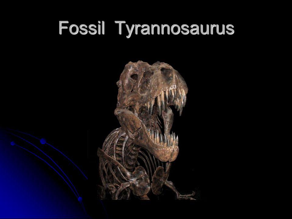 Fossil Tyrannosaurus