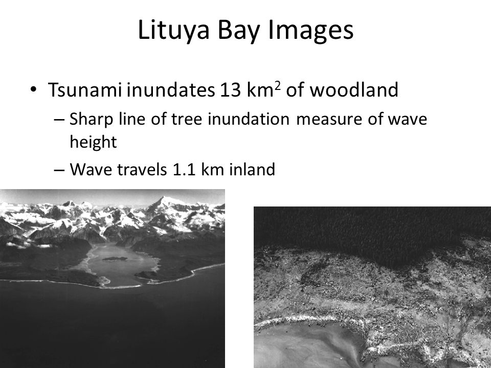 Lituya Bay Images Tsunami inundates 13 km 2 of woodland – Sharp line of tree inundation measure of wave height – Wave travels 1.1 km inland