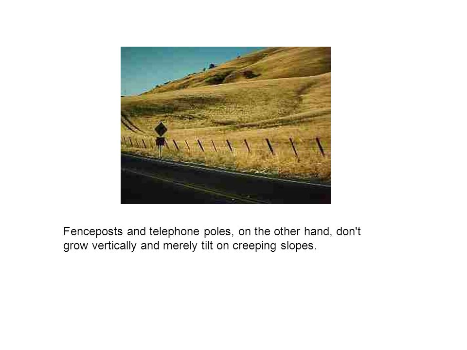 Fenceposts and telephone poles, on the other hand, don't grow vertically and merely tilt on creeping slopes.