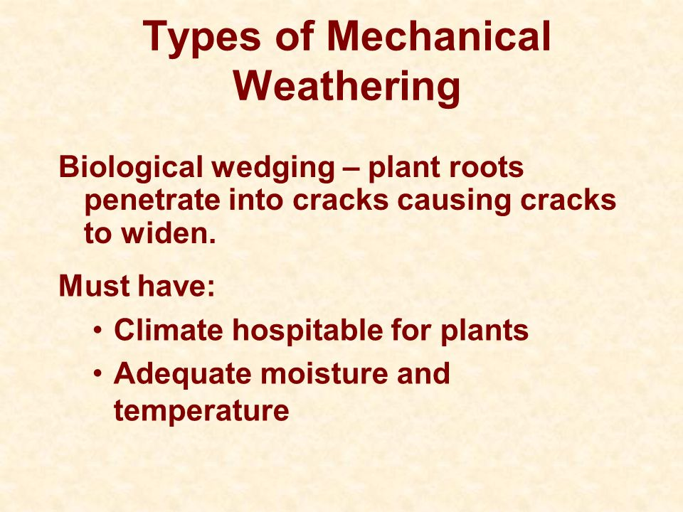 Types of Mechanical Weathering Biological wedging – plant roots penetrate into cracks causing cracks to widen. Must have: Climate hospitable for plant