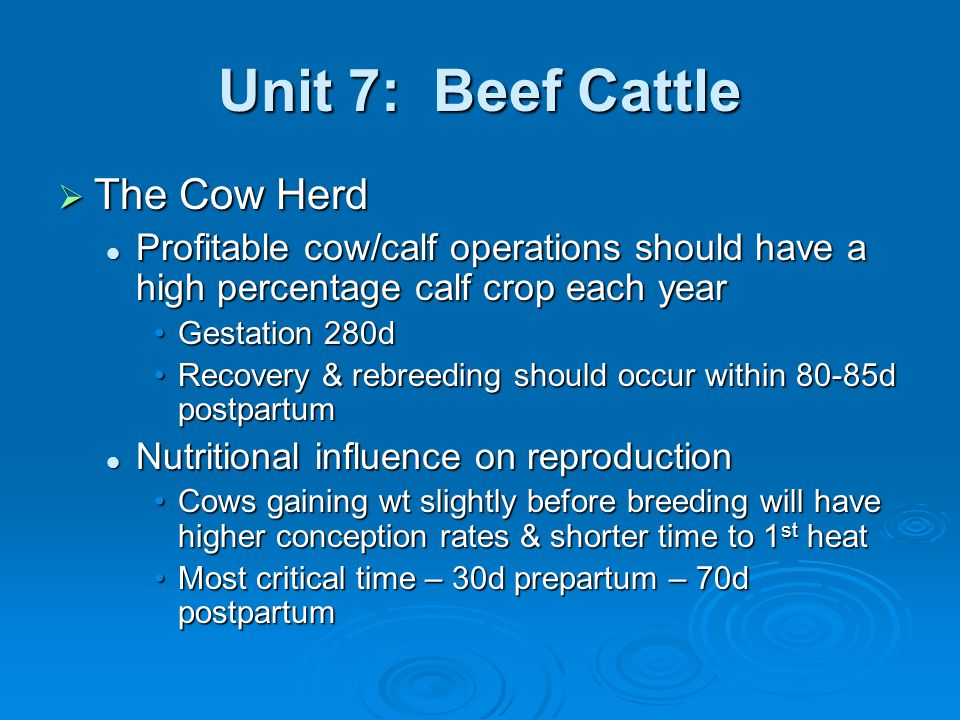 Unit 7: Beef Cattle Most cow/calf producers will choose 1 of 2 calving programs Most cow/calf producers will choose 1 of 2 calving programs March – AprilMarch – April September – OctoberSeptember – October Avoid severe cold or heat stressAvoid severe cold or heat stress See table 8-4 for nutritional requirements See table 8-4 for nutritional requirements Ration nutrient content should depend on: Ration nutrient content should depend on: Frame size & conditionFrame size & condition Stage of production & environmentStage of production & environment