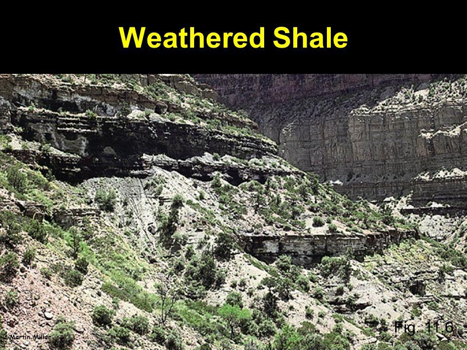 Weathered Shale Fig. 11.6 Martin Miller
