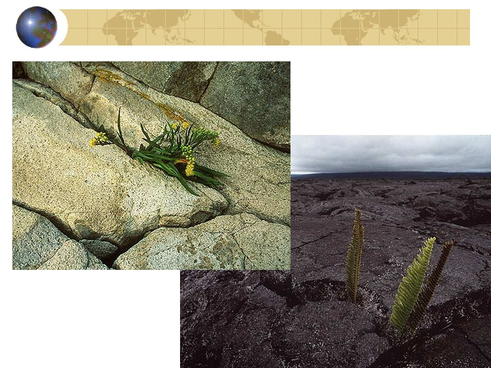 The roots of plants can work their way into the cracks of rocks and widen them while other plants and animals produce chemicals that can erode rock.