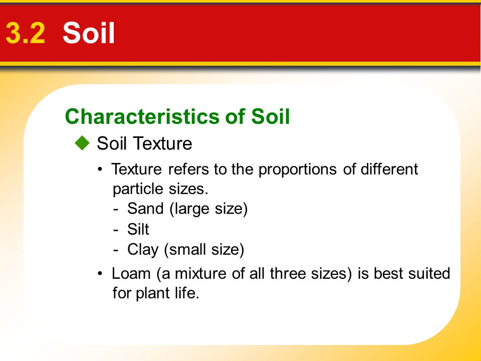 Characteristics of Soil 3.2 Soil  Soil Texture Loam (a mixture of all three sizes) is best suited for plant life. Texture refers to the proportions o