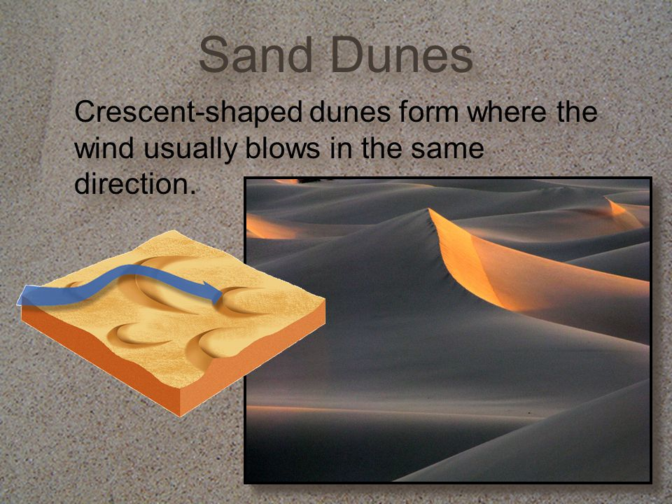 Sand Dunes Crescent-shaped dunes form where the wind usually blows in the same direction.