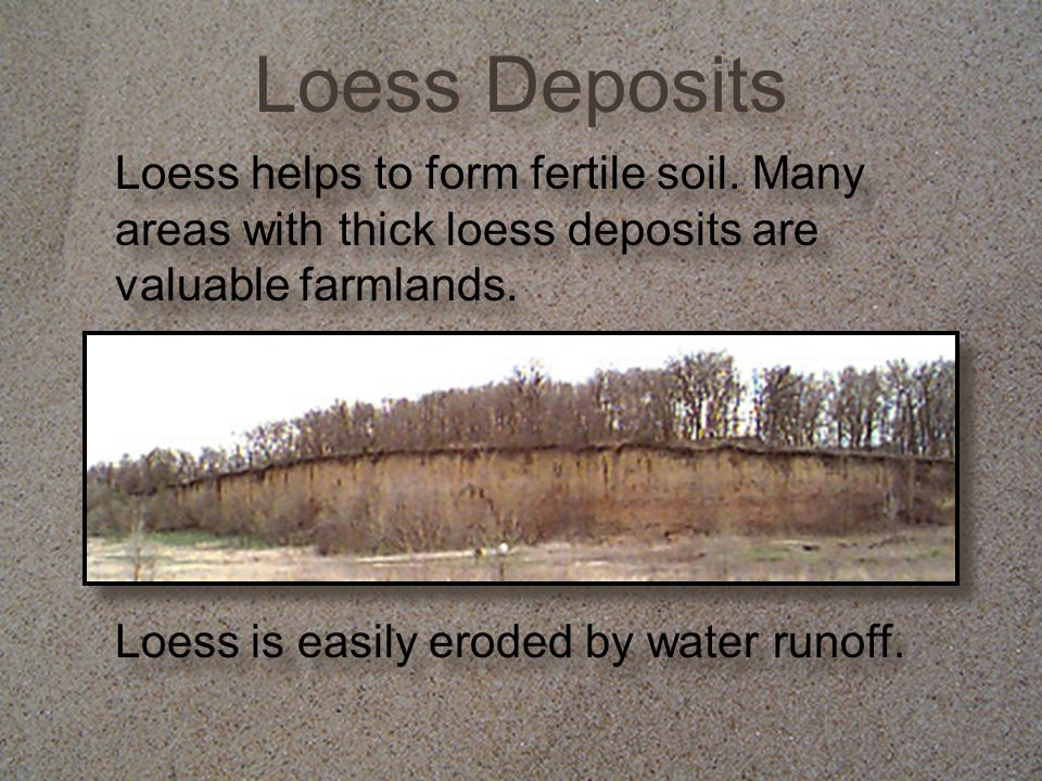 Loess Deposits Loess helps to form fertile soil. Many areas with thick loess deposits are valuable farmlands. Loess is easily eroded by water runoff.