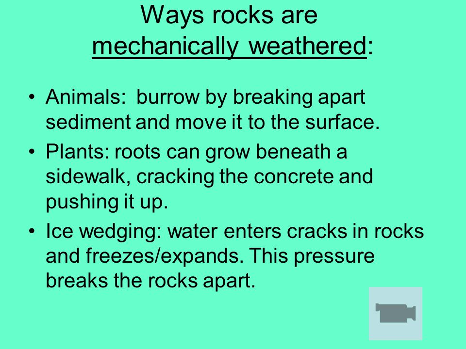 Ways rocks are mechanically weathered: Animals: burrow by breaking apart sediment and move it to the surface. Plants: roots can grow beneath a sidewal