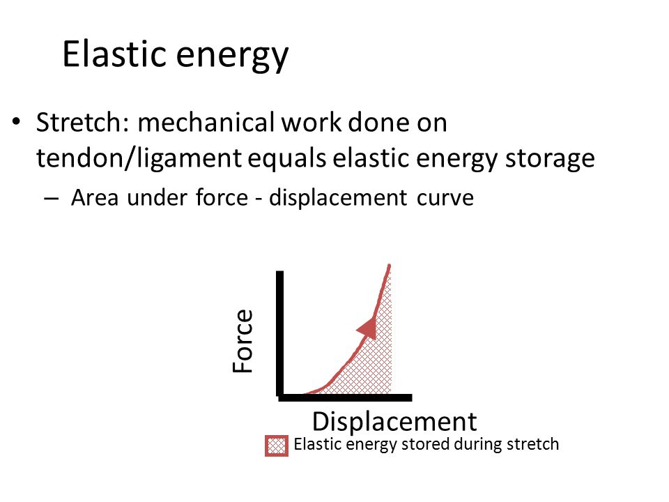 Elastic energy Stretch: mechanical work done on tendon/ligament equals elastic energy storage – Area under force - displacement curve Force Displaceme
