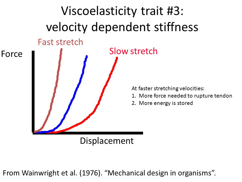 """Viscoelasticity trait #3: velocity dependent stiffness From Wainwright et al. (1976). """"Mechanical design in organisms"""". Displacement Force Fast stretc"""