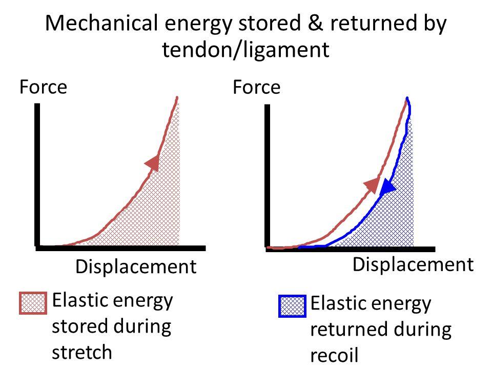 Elastic energy returned during recoil Mechanical energy stored & returned by tendon/ligament Force Displacement Force Displacement Elastic energy stor
