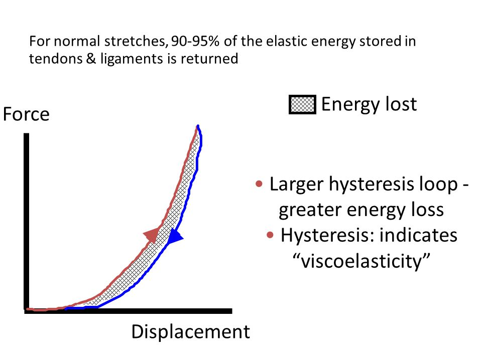 For normal stretches, 90-95% of the elastic energy stored in tendons & ligaments is returned Force Displacement Energy lost Larger hysteresis loop - greater energy loss Hysteresis: indicates viscoelasticity