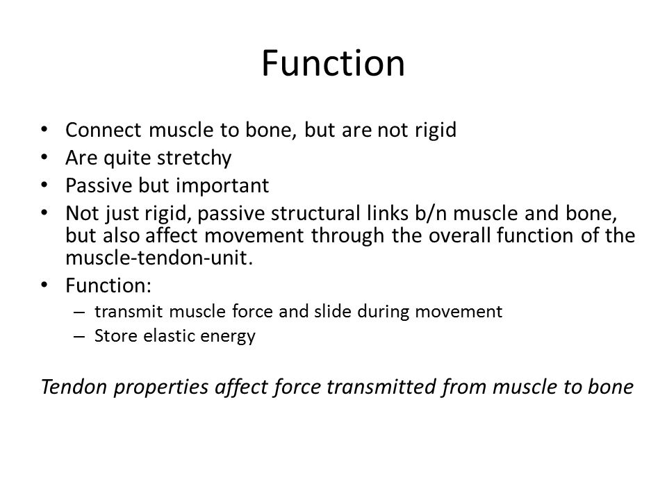 Function Connect muscle to bone, but are not rigid Are quite stretchy Passive but important Not just rigid, passive structural links b/n muscle and bone, but also affect movement through the overall function of the muscle-tendon-unit.