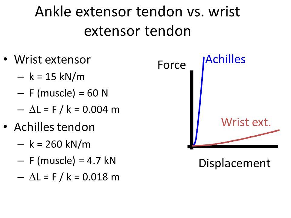 Ankle extensor tendon vs. wrist extensor tendon Wrist extensor – k = 15 kN/m – F (muscle) = 60 N –  L = F / k = 0.004 m Achilles tendon – k = 260 kN/