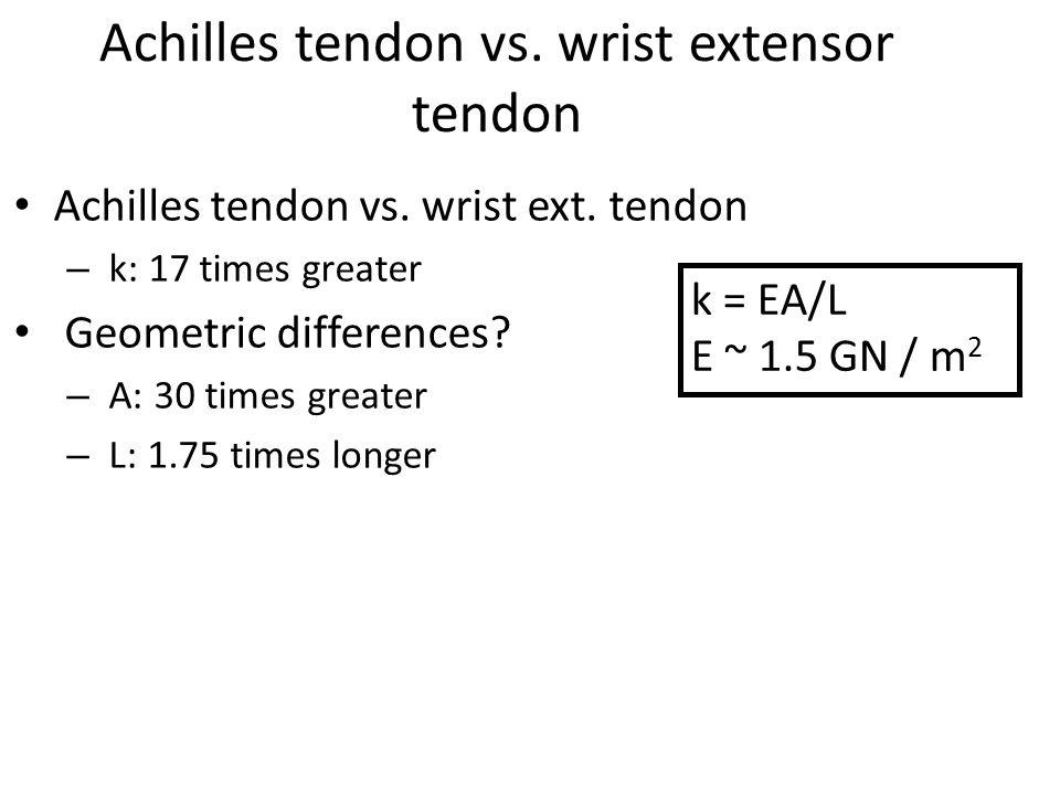 Achilles tendon vs. wrist extensor tendon Achilles tendon vs. wrist ext. tendon – k: 17 times greater Geometric differences? – A: 30 times greater – L
