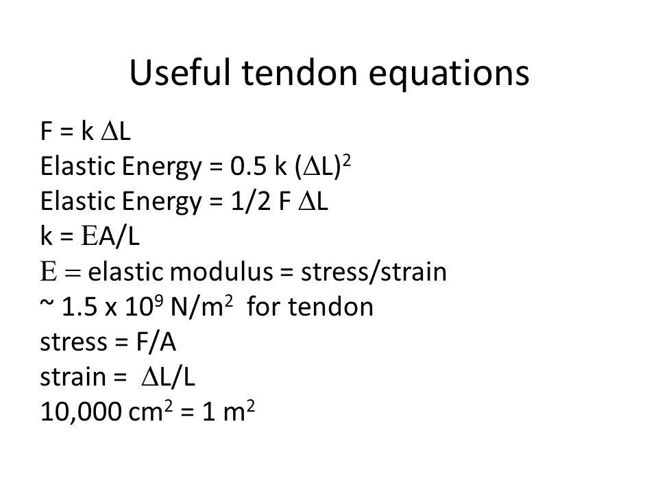 F = k  L Elastic Energy = 0.5 k (  L) 2 Elastic Energy = 1/2 F  L k =  A/L  elastic modulus = stress/strain ~ 1.5 x 10 9 N/m 2 for tendon stress = F/A strain =  L/L 10,000 cm 2 = 1 m 2 Useful tendon equations