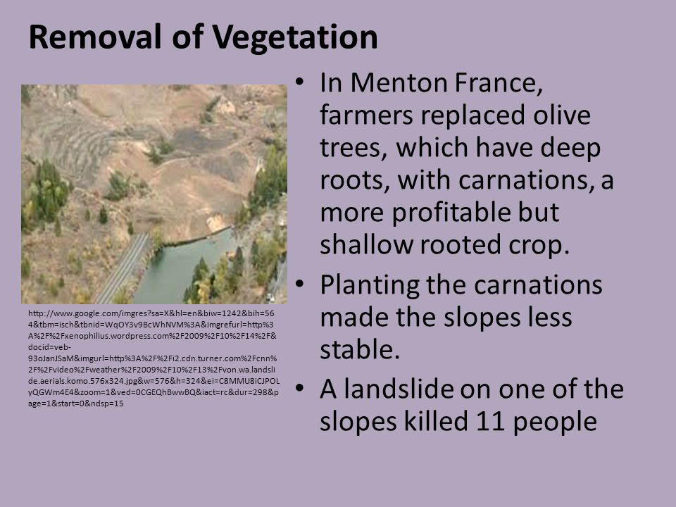 Removal of Vegetation In Menton France, farmers replaced olive trees, which have deep roots, with carnations, a more profitable but shallow rooted cro