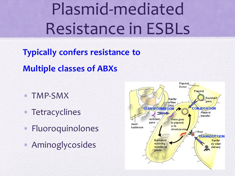 Plasmid-mediated Resistance in ESBLs Typically confers resistance to Multiple classes of ABXs TMP-SMX Tetracyclines Fluoroquinolones Aminoglycosides