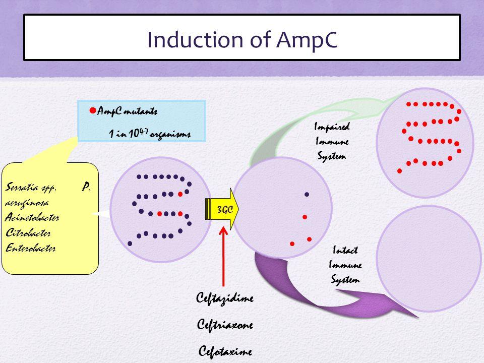 ● AmpC mutants 1 in 10 4-7 organisms Impaired Immune System Intact Immune System 3GC Ceftazidime Ceftriaxone Cefotaxime Serratia spp.
