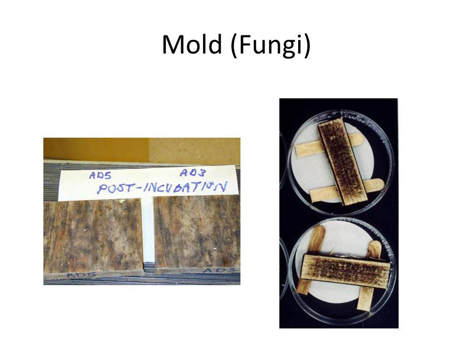 Mold (Fungi)