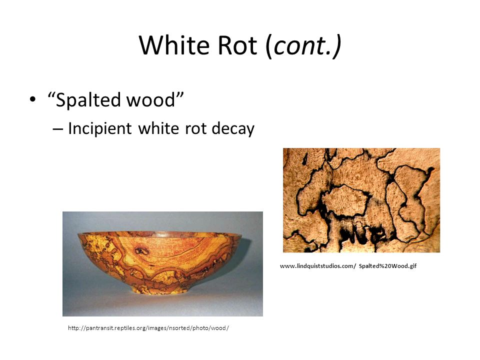 """White Rot (cont.) """"Spalted wood"""" – Incipient white rot decay www.lindquiststudios.com/ Spalted%20Wood.gif http://pantransit.reptiles.org/images/nsorte"""