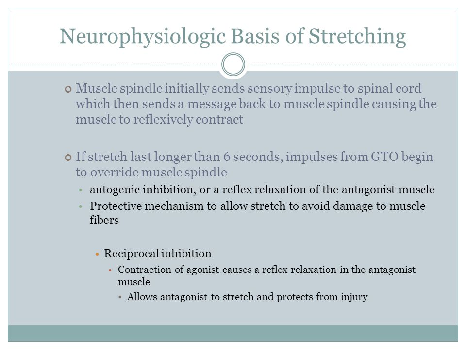 Neurophysiologic Basis of Stretching Muscle spindle initially sends sensory impulse to spinal cord which then sends a message back to muscle spindle c