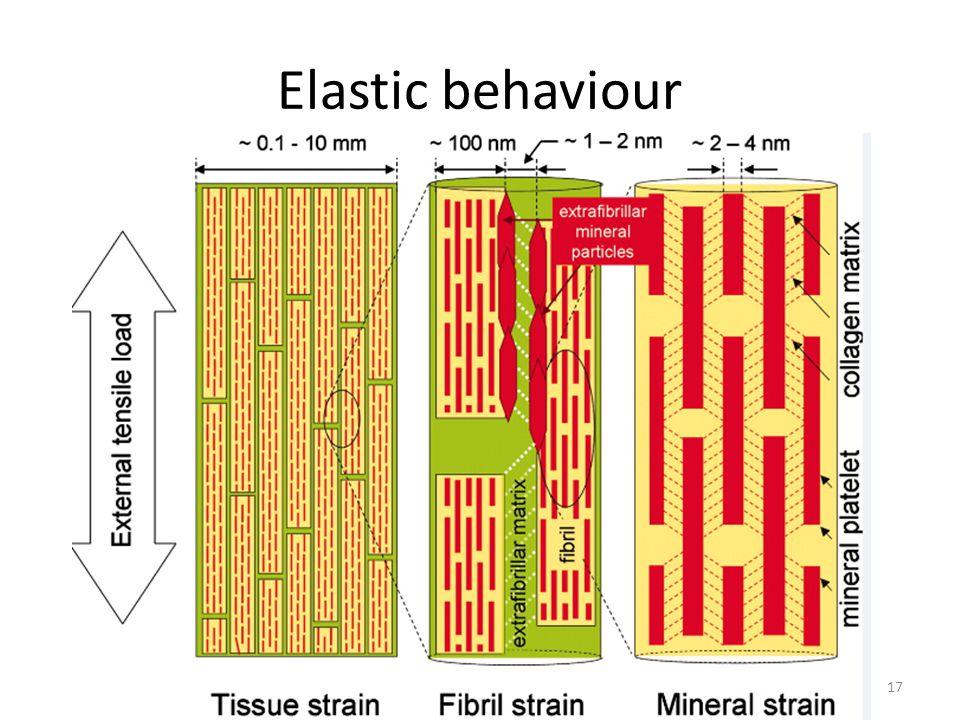 Elastic behaviour 17