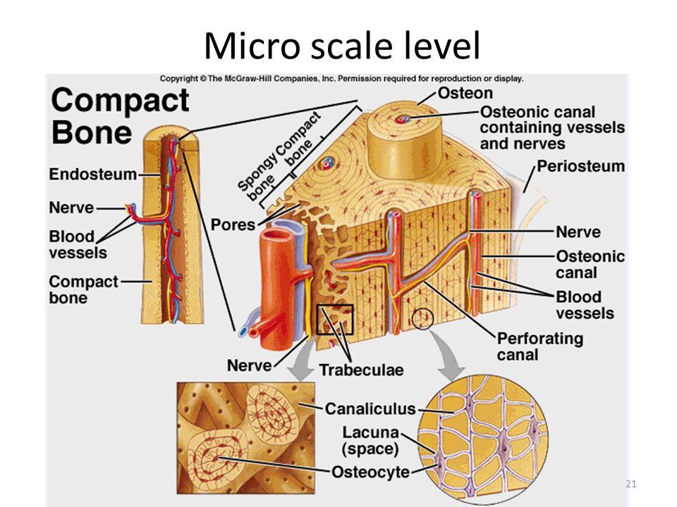 Micro scale level 21