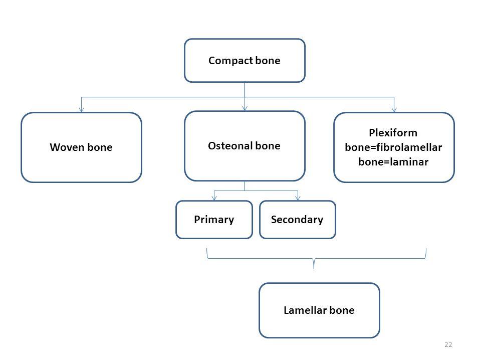 Compact bone Woven bone Osteonal bone Plexiform bone=fibrolamellar bone=laminar Lamellar bone 22 PrimarySecondary