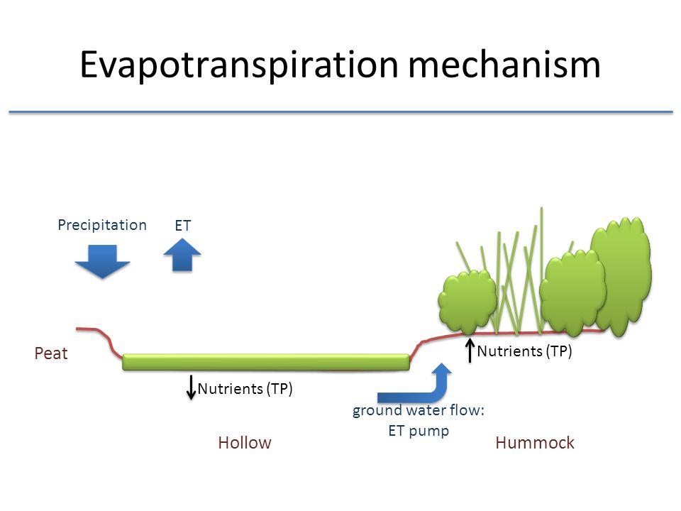 Evapotranspiration mechanism Nutrients (TP) Hollow Hummock ground water flow: ET pump Precipitation ET Peat