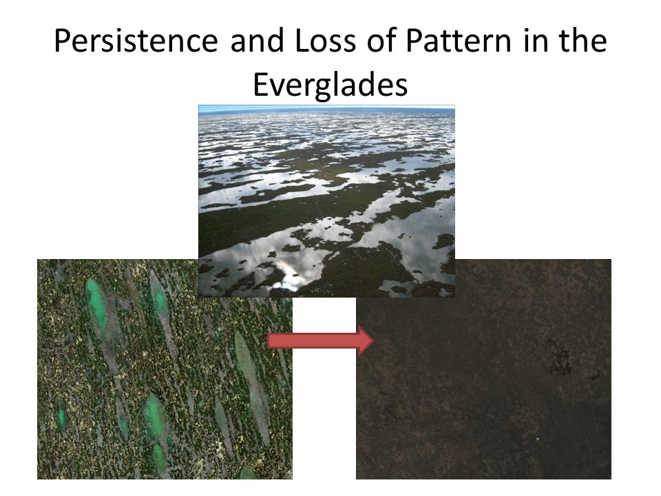 Persistence and Loss of Pattern in the Everglades
